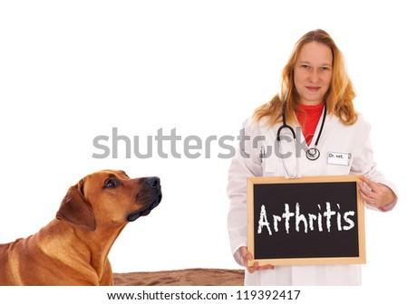 Veterinarian with dog and shield - Arthritis / Veterinarian - stock photo