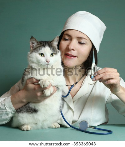 veterinarian woman in uniform and hat with stetoscope and thermometer examin siberian grown up male cat on the table in veterinary clinic center - stock photo