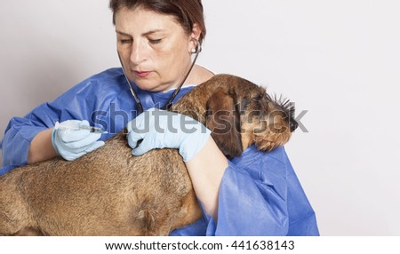 veterinarian woman with Dog  - stock photo