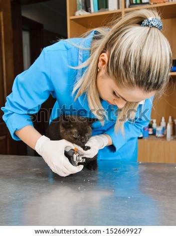 veterinarians cuts nails of cat in veterinary station - stock photo