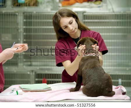 veterinary assistant prepares a vaccine shot - stock photo