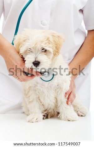 Veterinary care concept - small fluffy dog at health checkup - stock photo