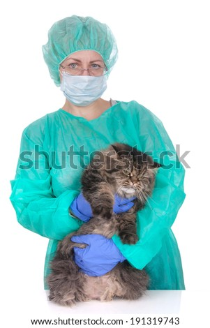 Veterinary caring of a persian cat over white - stock photo