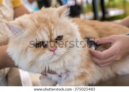 veterinary checking the heart rate of cat with stethoscope. (animal hospital) - stock photo
