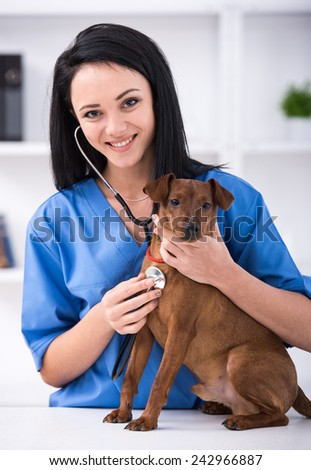 Veterinary clinic. Cute dog during examination by a veterinarian. - stock photo