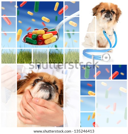 Veterinary concept. Dog and pills. - stock photo