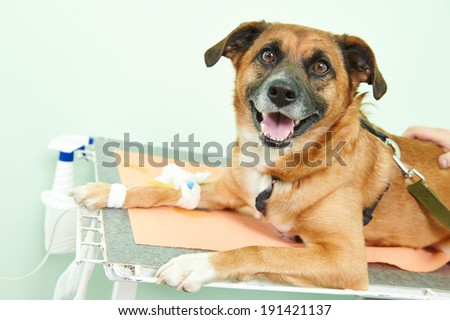 veterinary giving the vaccine to the dog in clinic - stock photo
