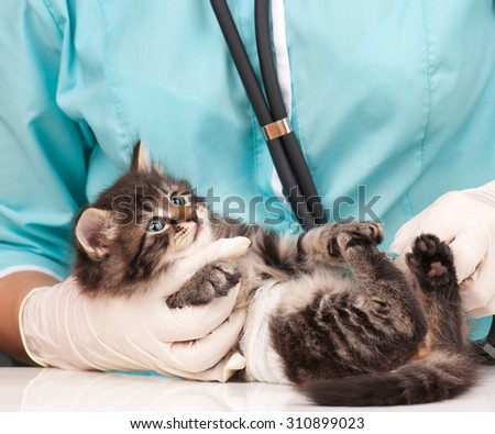 Veterinary survey of cute little kitten close-up - stock photo