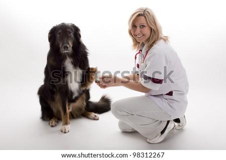 veterinary with dog - stock photo