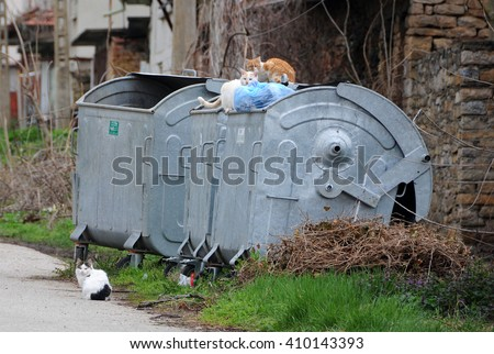 VETRINTSI VILLAGE, VELIKO TARNOVO PROVINCE, BULGARIA - MARCH 15, 2016: Three stray cats sit on the garbage container - stock photo