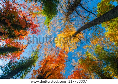 Vibrant autumn colors on a sunny day in the forest - stock photo