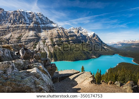 Vibrant Blue Peyto Lake from Bow summit Banff National Park, Alberta Canada - stock photo