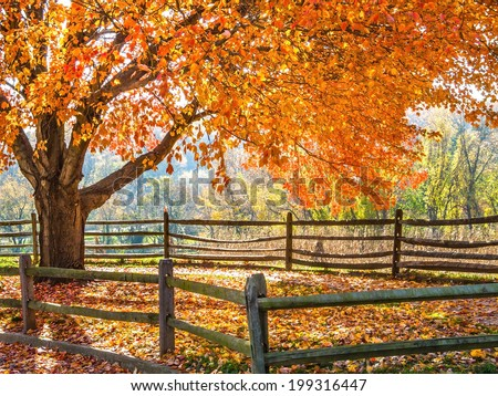 Vibrant Fall colors on a beautiful day in Holmdel Park in New Jersey. - stock photo