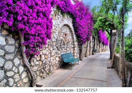 Vibrant flower draped pathway in Capri, Italy - stock photo