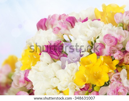 vibrant fresh freesias bouquet on blue sky background - stock photo