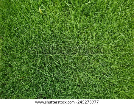 Vibrant green grass close-up background - stock photo