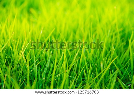 Vibrant green grass close-up with DOF focus. - stock photo