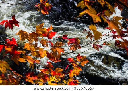 Vibrant maple leaves backlit by the sun with a river rapid in the background - stock photo