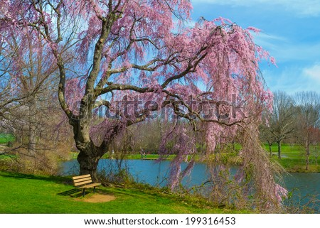 Vibrant Spring blossoms by the lake in Holmdel Park in New Jersey. - stock photo