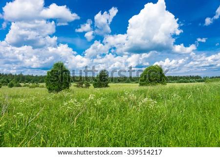 Vibrant Springtime Scenic View  - stock photo