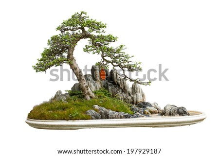 Vietnam bonsai tree Isolated on white background - stock photo