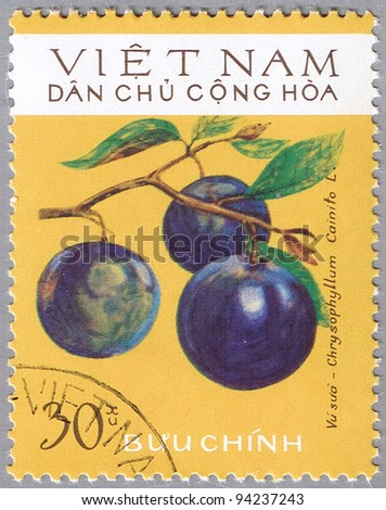 VIETNAM - CIRCA 1975: A stamp printed in Vietnam shows Chrysophyllum cainito or star apple, series, circa 1975 - stock photo