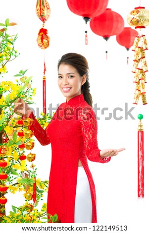 Vietnamese girl decorating apricot tree for Vietnamese New Year - stock photo