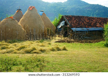 Vietnamese village, stack of straw, food reserve for cattle after crop, Vietnam is agriculture country. Beautiful landscape, cowshed and mountain make calm rural at Khanh Hoan, Viet Nam - stock photo