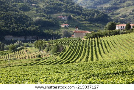 View across vines in Italy toward a church in Piedmont, Italy. - stock photo