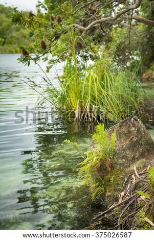 View along the lake edge at Blue Lake on North Stradbroke Island, Queensland, Australia - stock photo