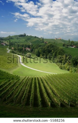 View at at South Styria hills with rows of grapes - stock photo