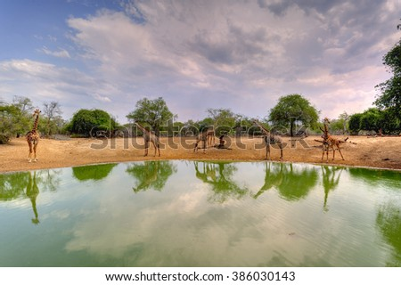 View from a hide at a waterhole in the Zululand bush veld, south Africa - stock photo