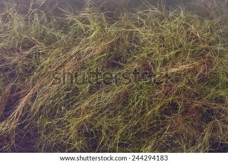 View from above of river grasses, Tasmania, Australia - stock photo