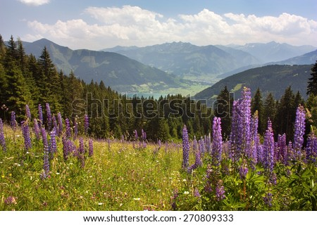 View from Austrian Alps around Zell am See - valley with woods and beautiful flowering alpine meadow - Austria - stock photo