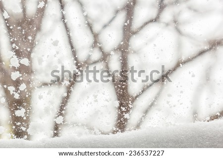 View from the window on the snow-covered garden and a snowstorm in a gloomy winter day - stock photo