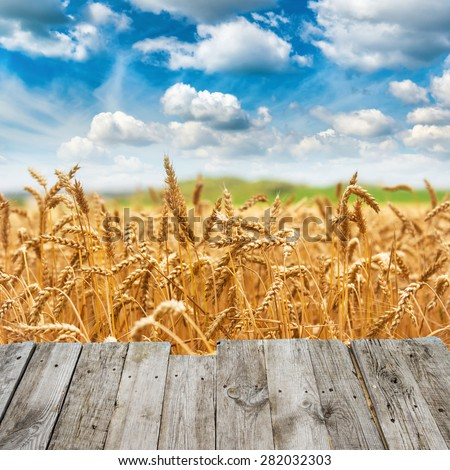 View from wooden bridge to gold wheat field fresh crop and blue sky with clouds - stock photo