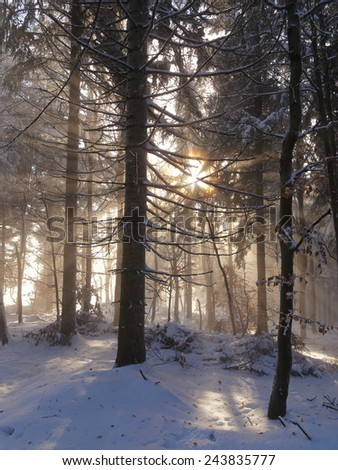 View into a forest in winter against light - stock photo