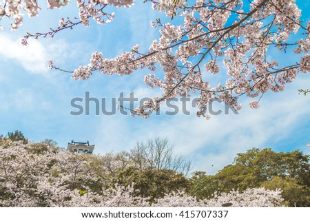 View Japan Castle in Cherry Blossoms Park - stock photo