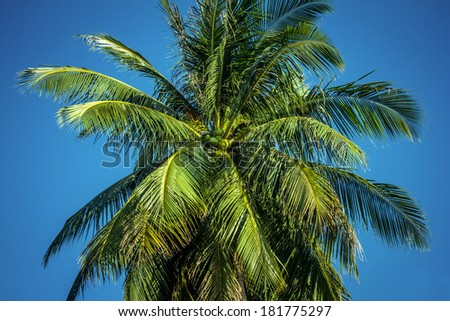 view of a beautiful palm tree with blue sunny sky - stock photo