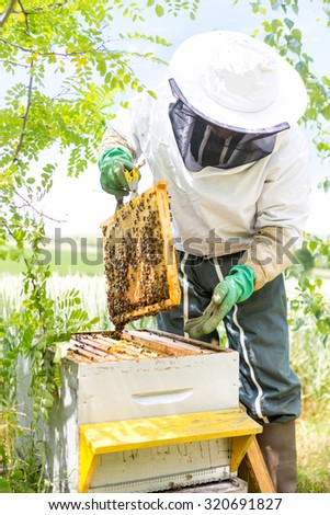 VIew of a Beekeeper working on his beehives in the garden - stock photo