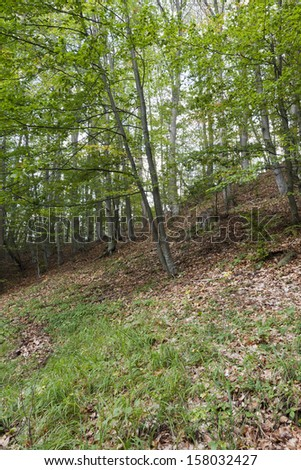 View of a dirt road in the mixed forest - stock photo