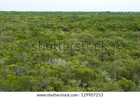 View of a mangrove forest in Florida from a high vantage point - stock photo