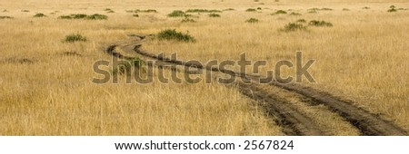 view of a path  in a plain in the natural reserve of masai mara. - stock photo
