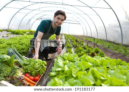 View of a Young attractive farmer harvesting vegetables - stock photo