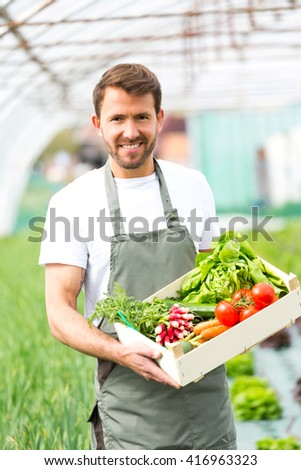 View of a Young attractive man harvesting vegetable in a greenhouse - stock photo
