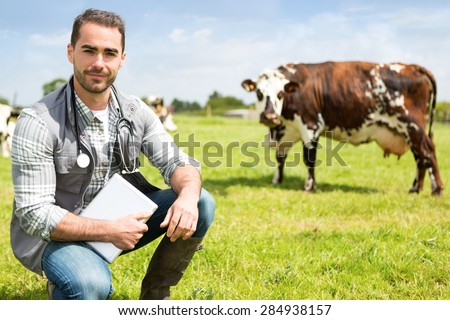 View of a Young attractive veterinary in a pasture with cows  - stock photo