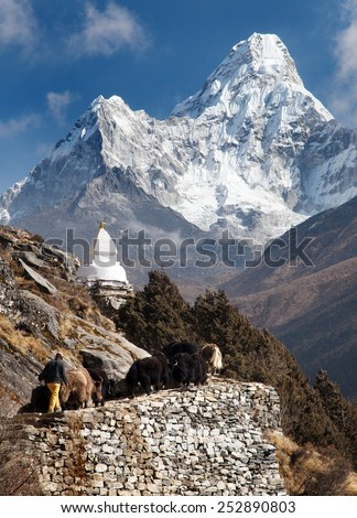 View of Ama Dablam with stupa and caravan of yaks - way to Everest base camp - Sagarmatha national park - Nepal - stock photo