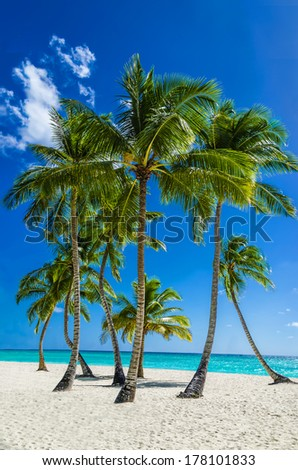 View of an exotic beach with tall palm trees and yellow sand - stock photo