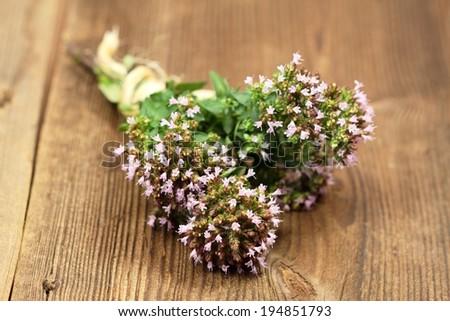 View of aromatic herb, lat. Origanum vulgare - stock photo