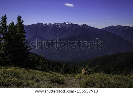 View of Baileys Ridge in the Olympic Mountains from the trail to Hurricane Hill. - stock photo